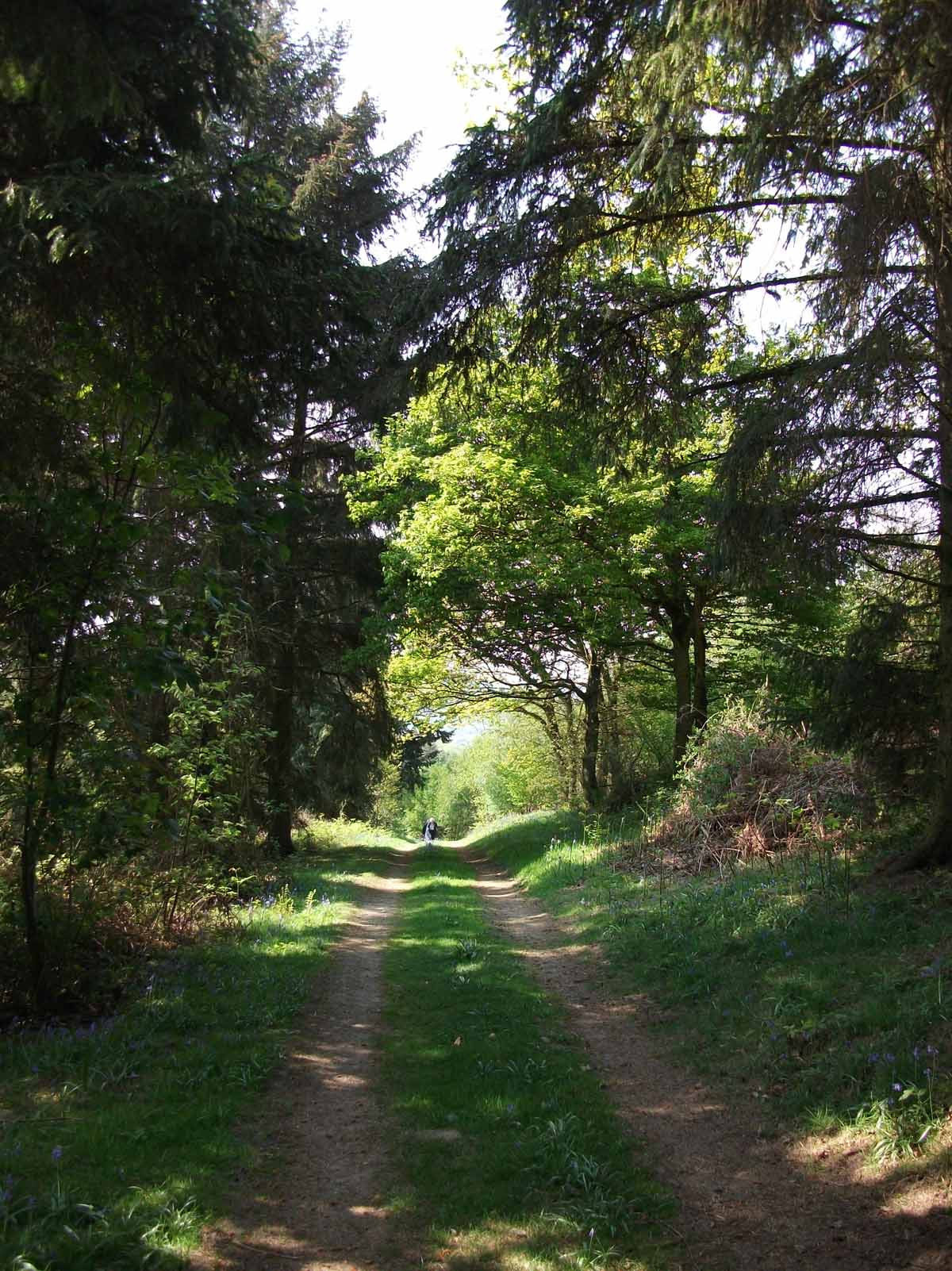 A track leading up to the Burrow